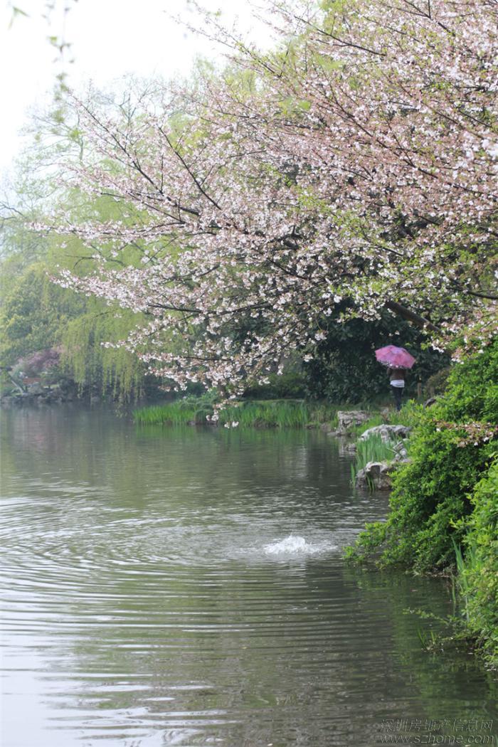2013杭州西湖春天