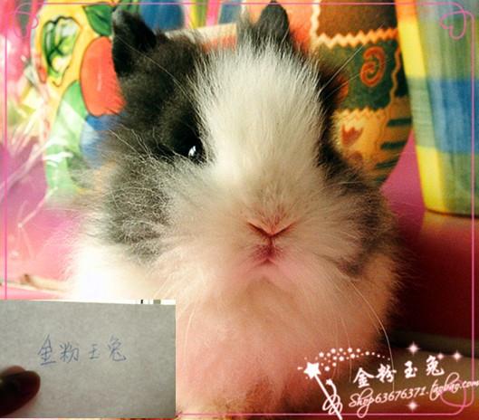 超萌绝美可爱到流口水滴,小兔兔来了!颜色超级稀有!内
