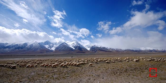 雪山和蓝天白云,山脚下就是青藏铁路,铁路旁边的星星密布的羊群.