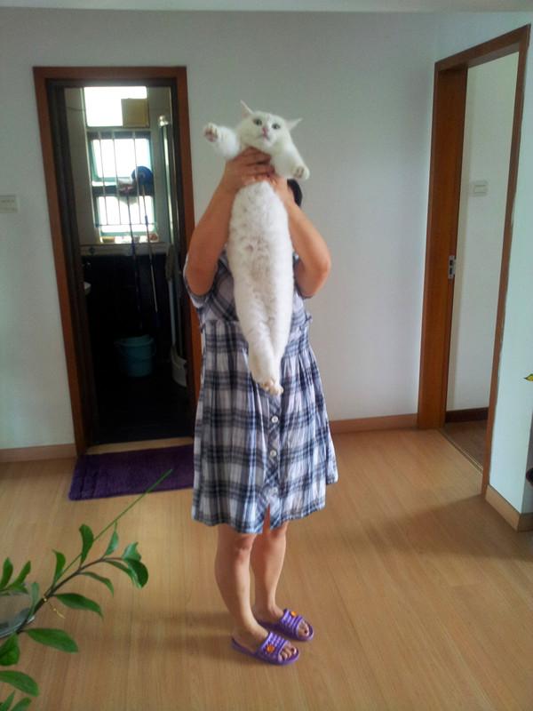 【2013创意举猫】可爱的白胖子