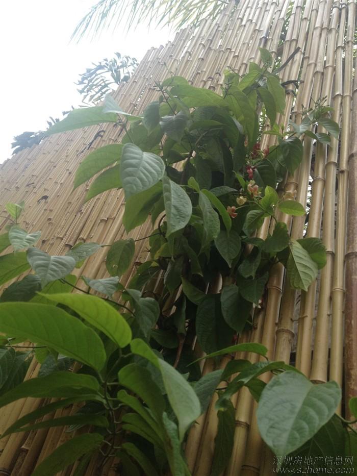 壁纸 成片种植 风景 盆景 盆栽 植物 种植基地 桌面 700_933 竖版 竖
