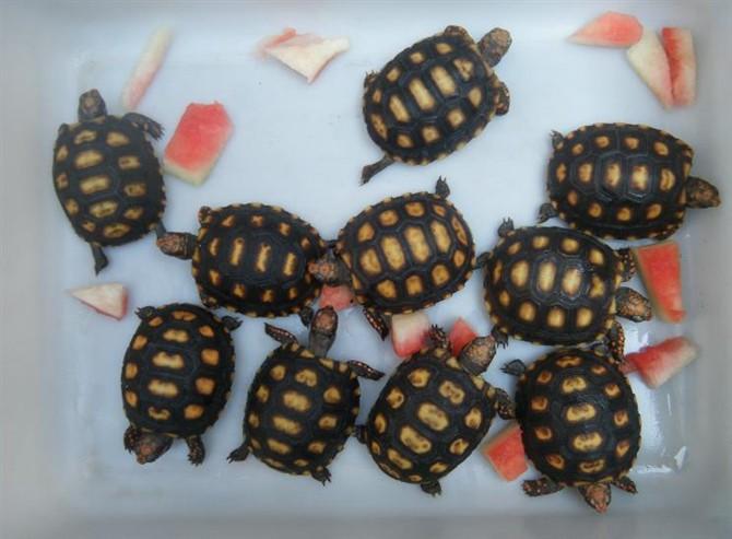 家在深圳  购物 五花八门  > 金刚鹦鹉,缅甸蟒,辐射陆龟等出售
