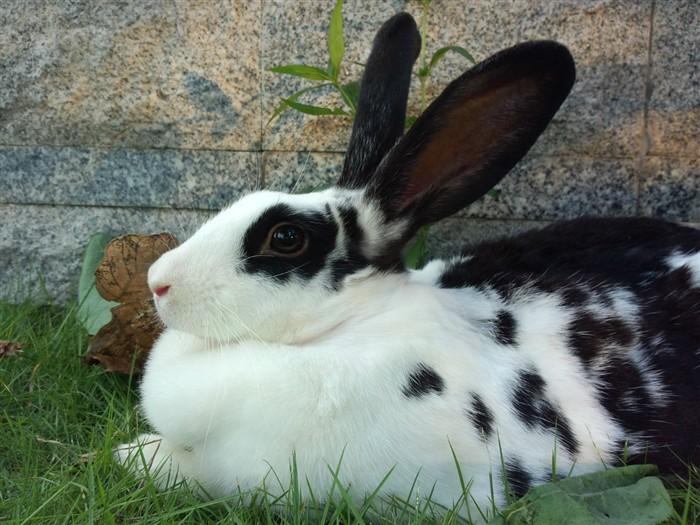 兔子有点拉肚子怎么办 急求指点