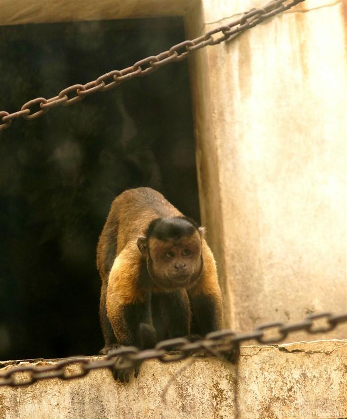 动物园的猴子(暑假拍摄)