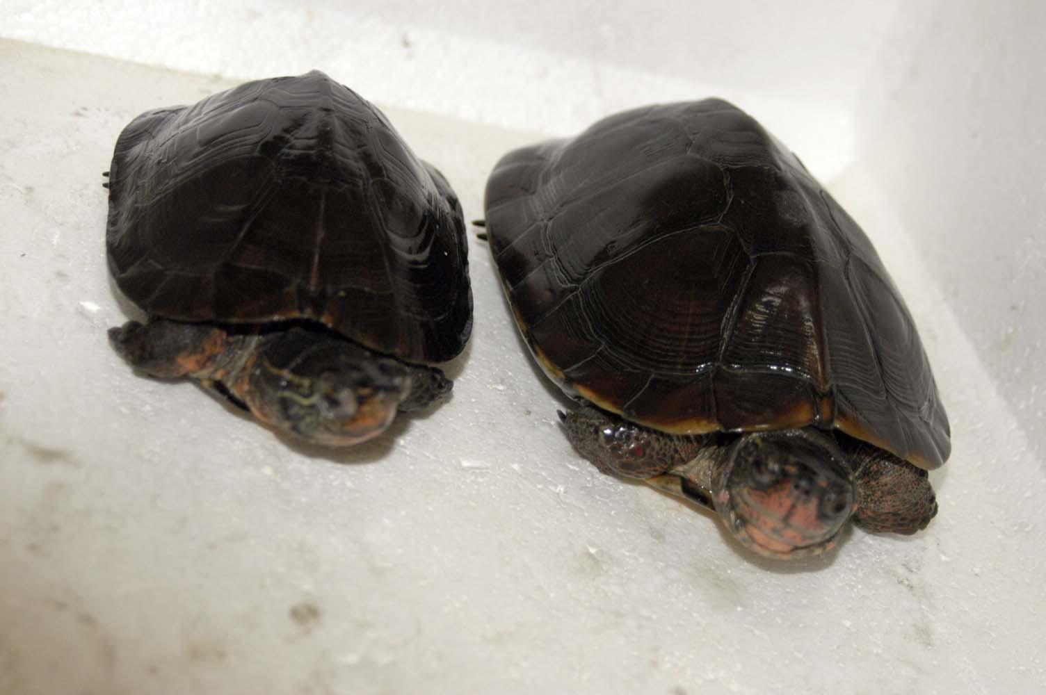 求黑颈乌龟 - 家在深圳(深圳房地产信息网论坛)