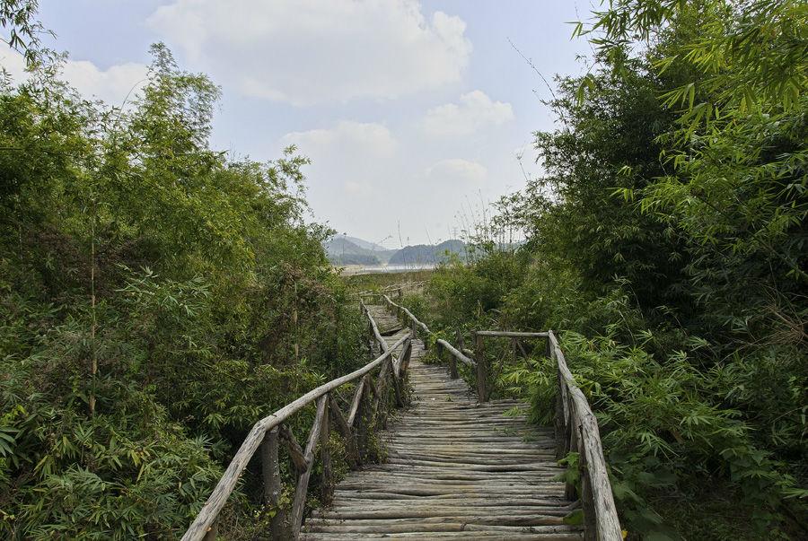 > 城市之肺——清林径森林公园 美景赏析!