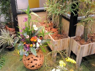 室内适合摆放哪些花卉植物