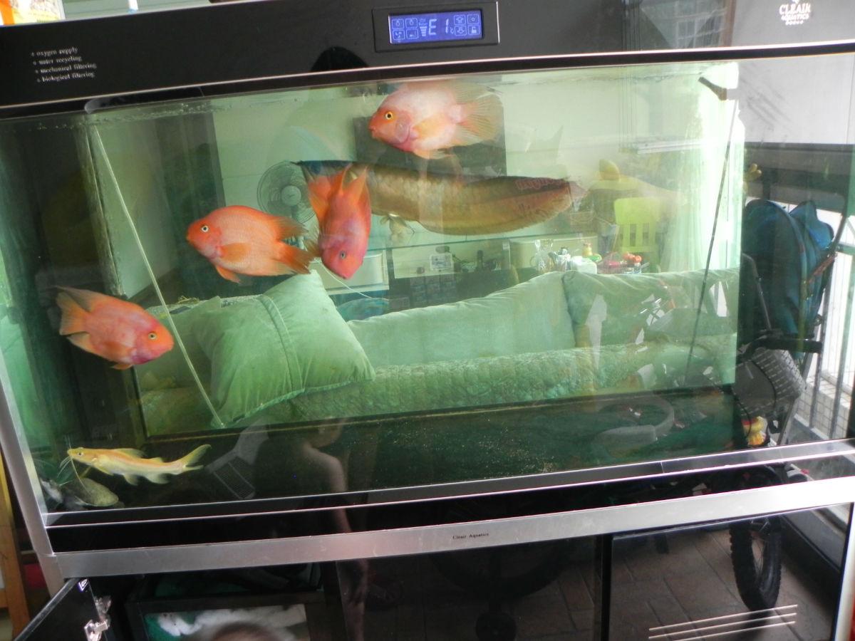 5米可丽爱鱼缸,美迪饮水机