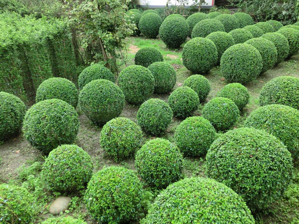 绘制灌木或绿篱手绘效果图