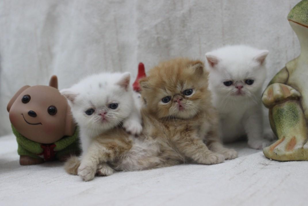 记录下我家三只加菲猫的萌宇宙大爆发