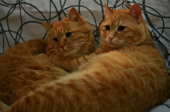 【2013创意举猫】家有双胞胎.