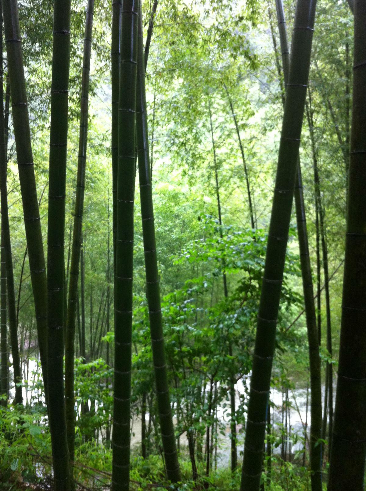 壁纸 风景 森林 桌面 1200_1606 竖版 竖屏 手机