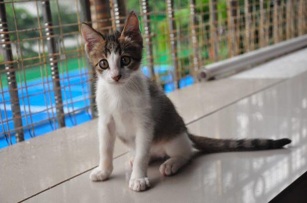 2013年最可爱的小猫! 求收养!
