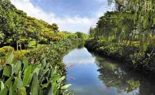 """> 东莞创森林城市工作获肯定 将建10个湿地公园     """"天然氧吧""""同沙"""