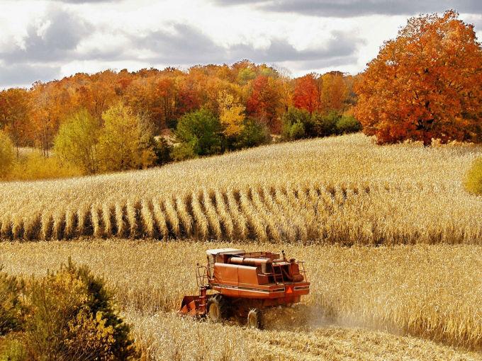 丰收的秋天简笔画图片_丰收的秋天