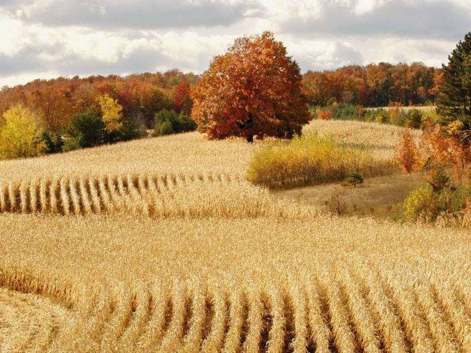丰收 图 秋天大丰收的美