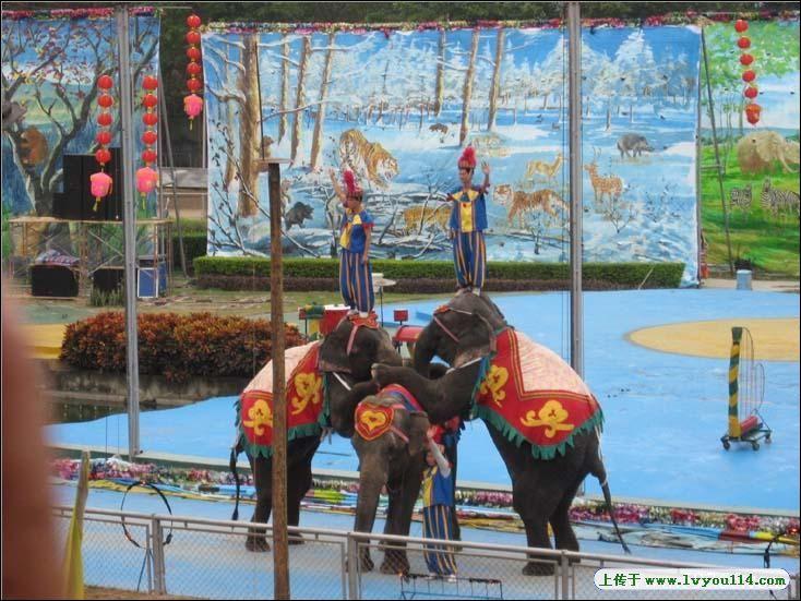 深圳西丽野生动物园+海洋天地