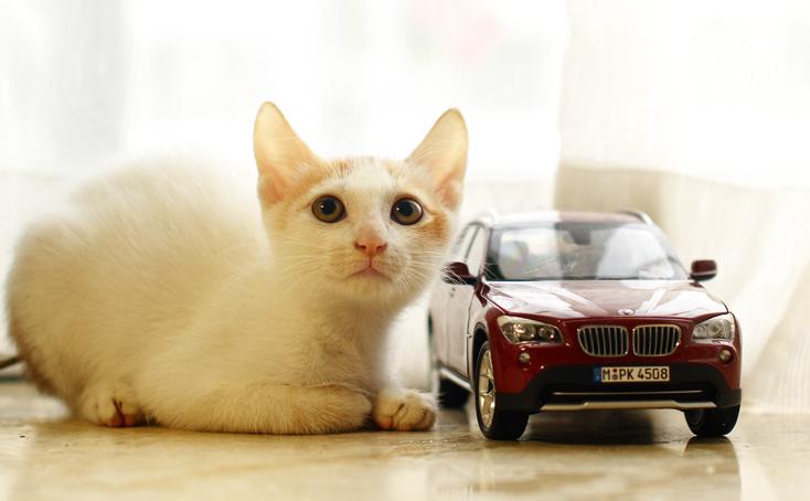 明亮眼镜的小白猫求领养