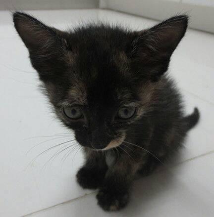 非常可爱的小黑猫等待您的领养