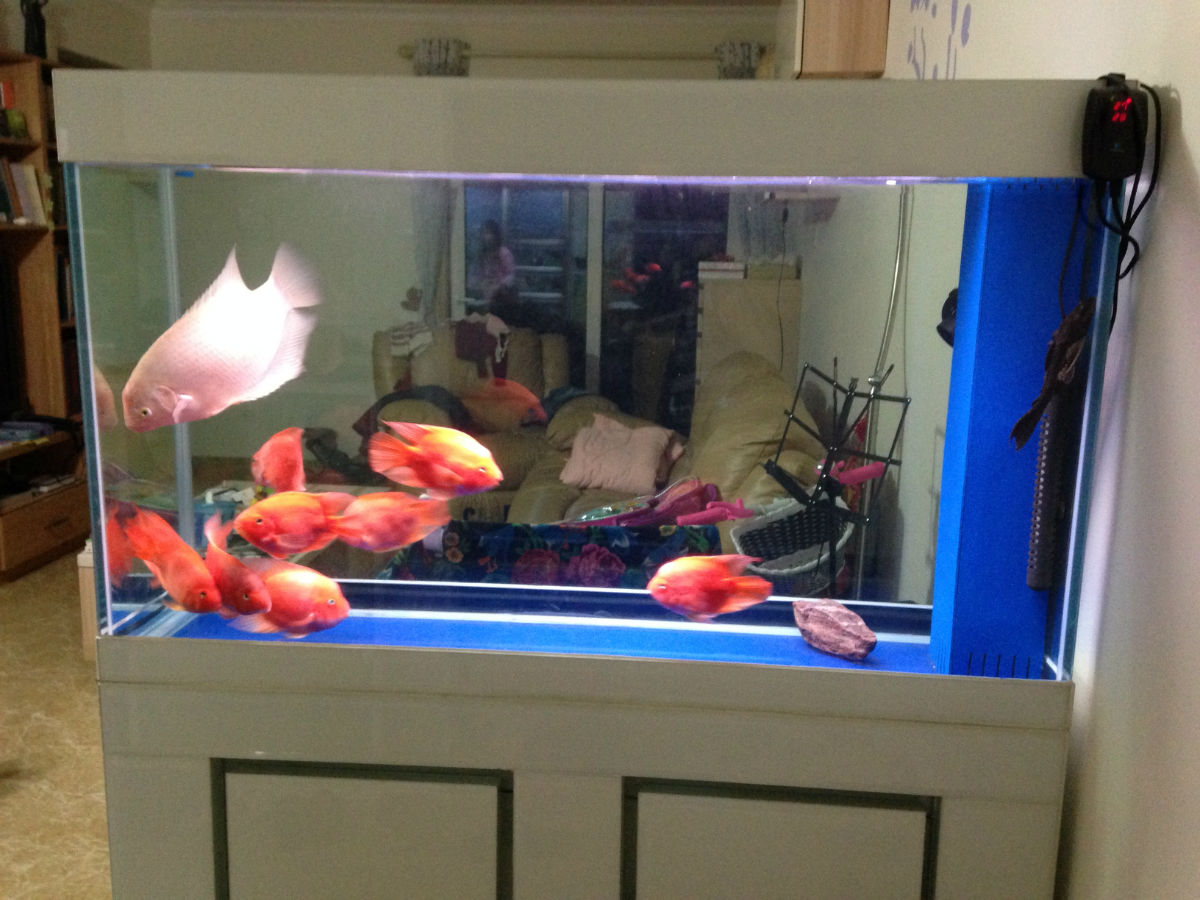 客廳玻璃魚缸隔斷
