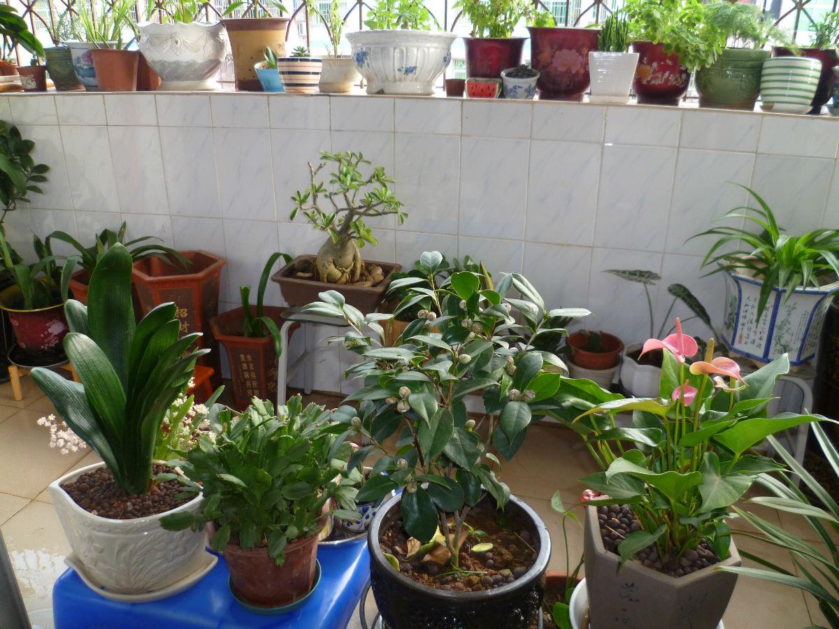 2013冬天的阳台花卉