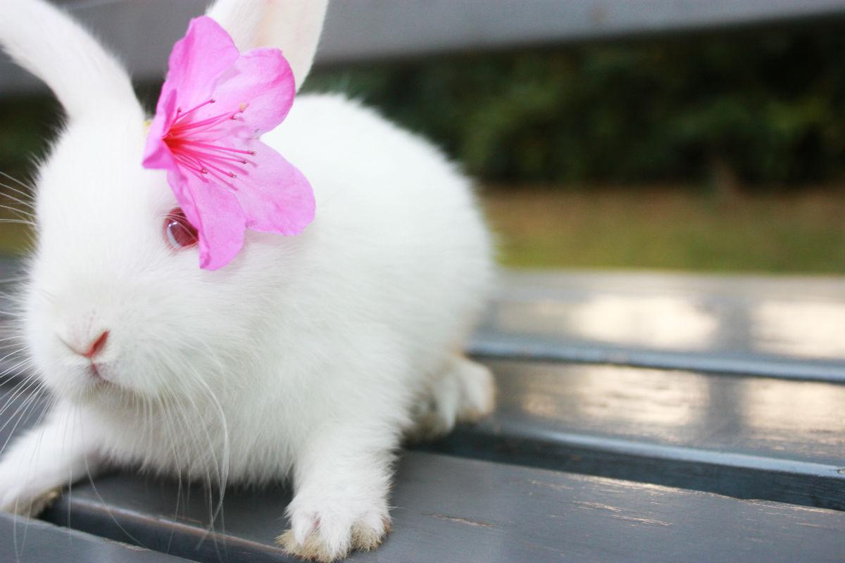 【本期每周一星获奖者】萌小兔的美好生活…(求娃娃亲