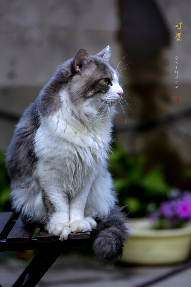 壁纸 动物 猫 猫咪 小猫 桌面 667_1000 竖版 竖屏 手机