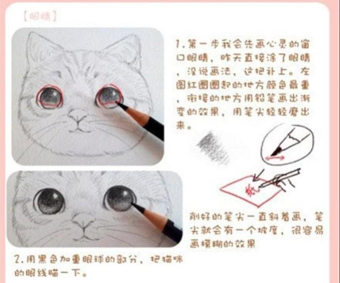 萌物小课堂——彩铅画猫步骤图