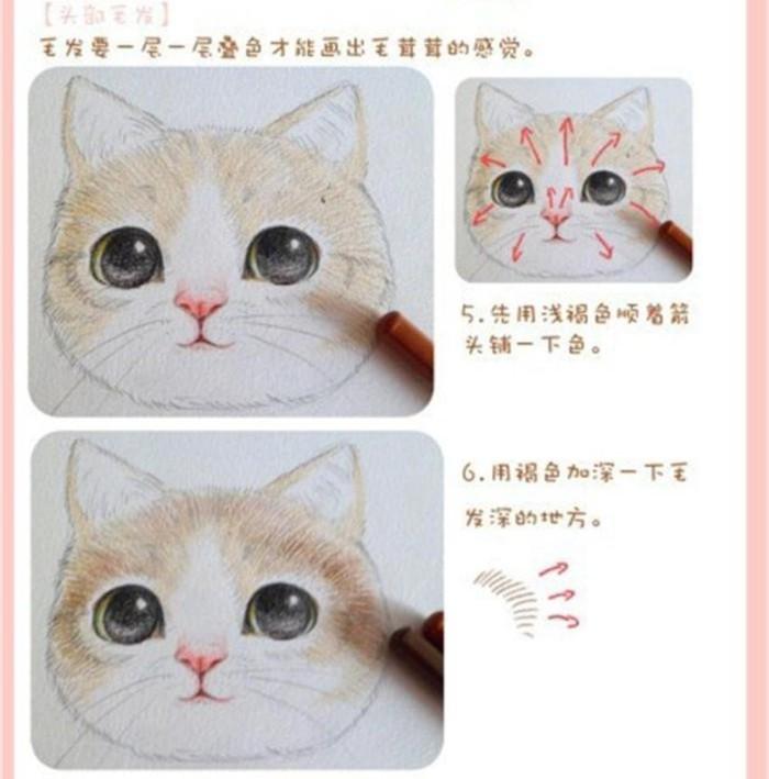 [图片]彩铅画猫的 步骤 图解/如何 画彩铅画 / 彩铅画 教程
