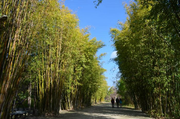 大理竹林风景壁纸