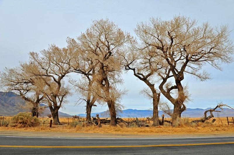 壁纸 沙漠 树 杨树 桌面 800_532