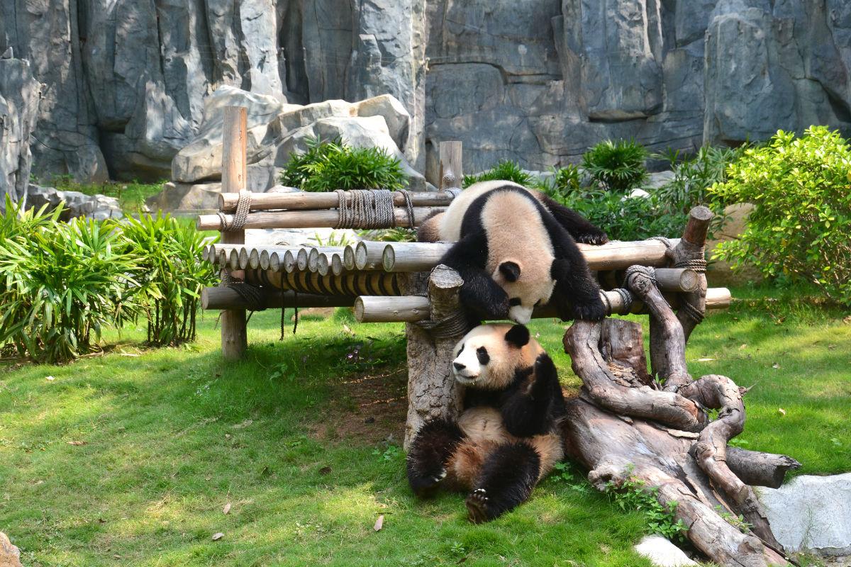 深圳野生动物园 - 深圳房地产信息网论坛