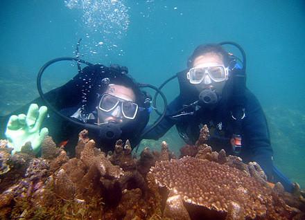 壁纸 海底 海底世界 海洋馆 水族馆 440_318