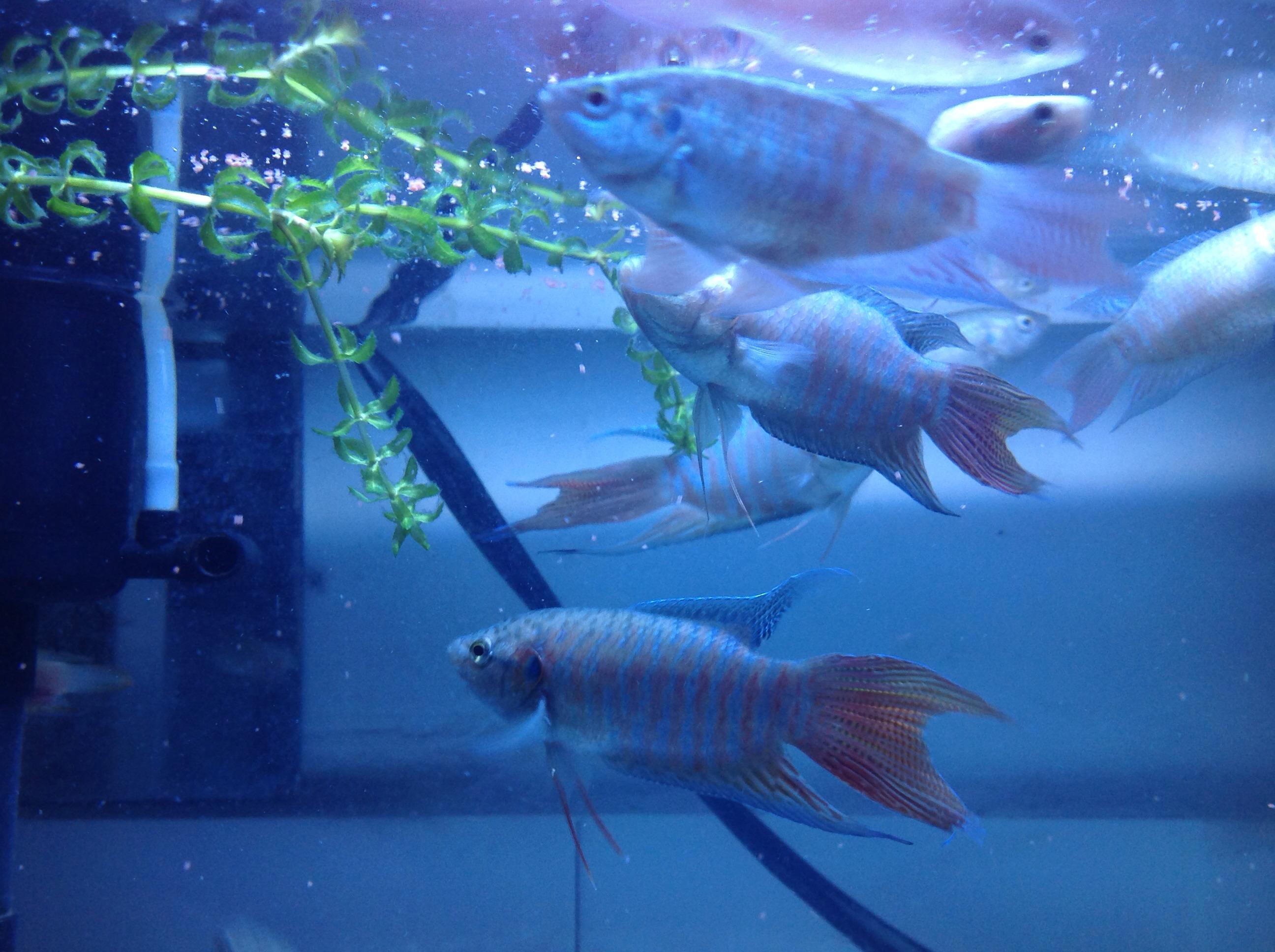 壁纸 动物 海底 海底世界 海洋馆 水族馆 鱼 鱼类 2592_1936