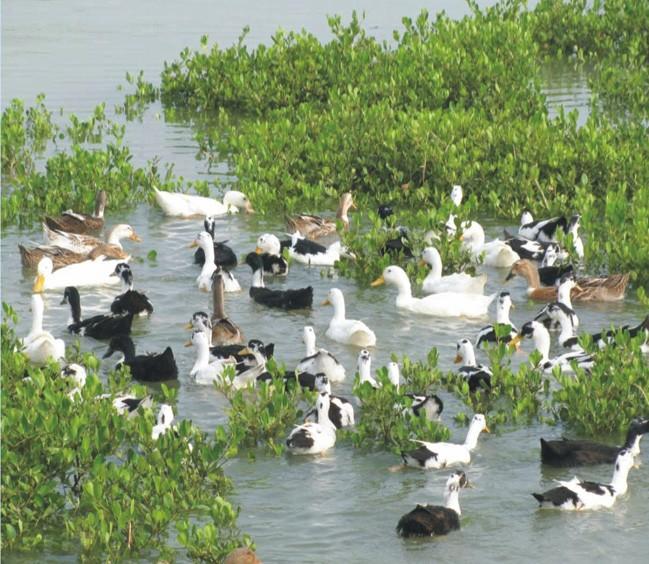 央视推荐-----广西北部湾红树林海鸭蛋