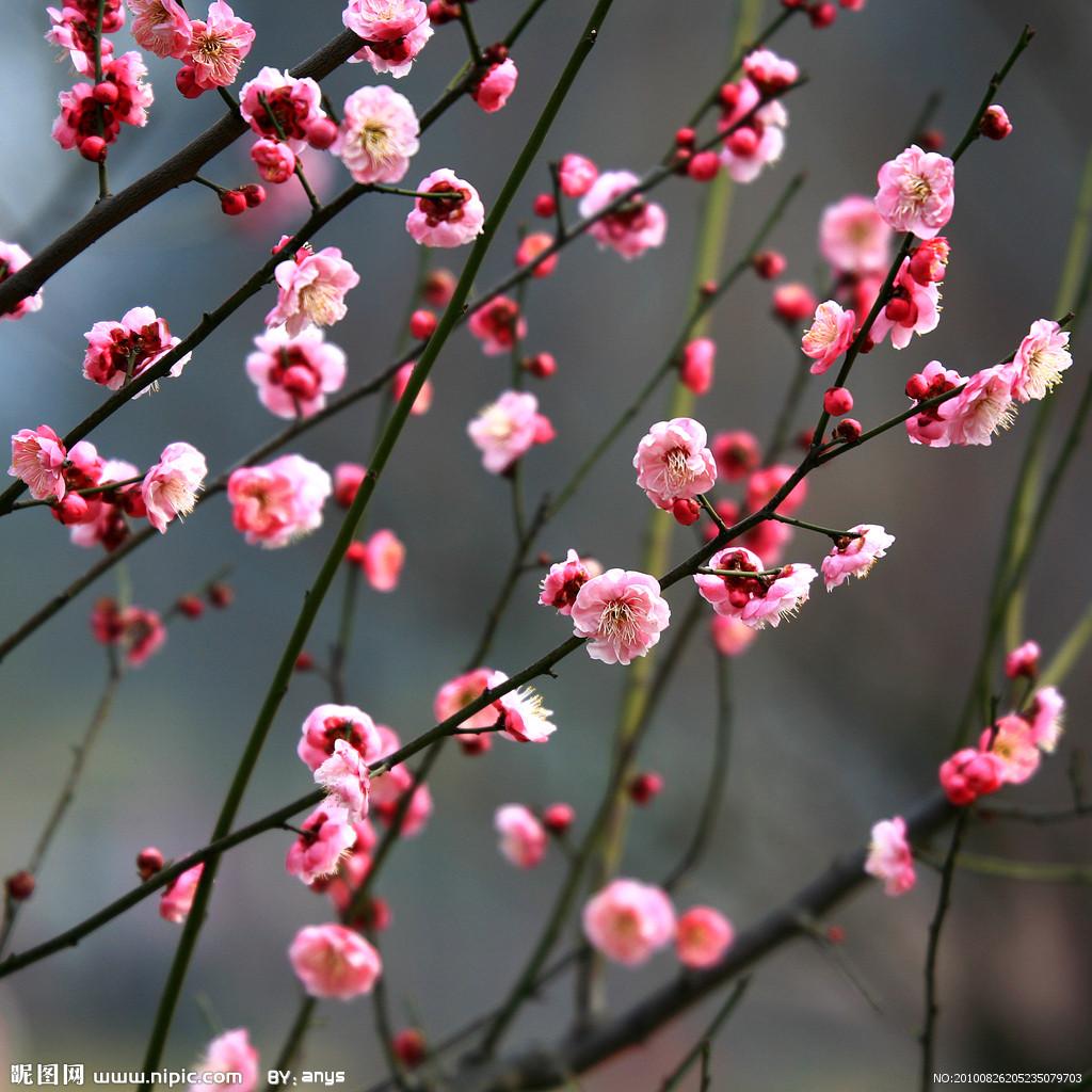 震妈很喜欢古风古韵,看到dg出的桃花系列,我也是热血沸腾.