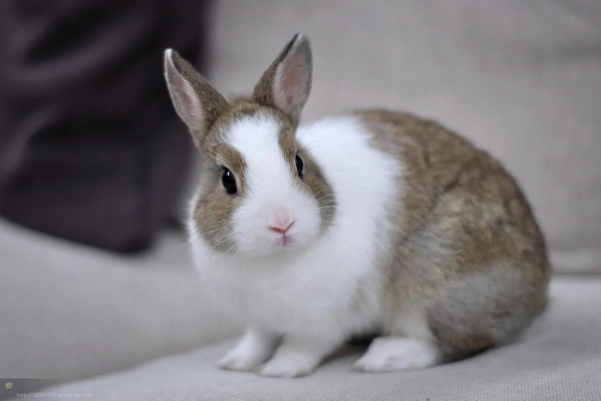 兔子窝 - 家在深圳 - 房网论坛