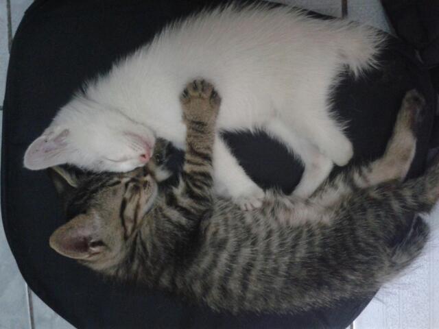四只小猫求新主人领养