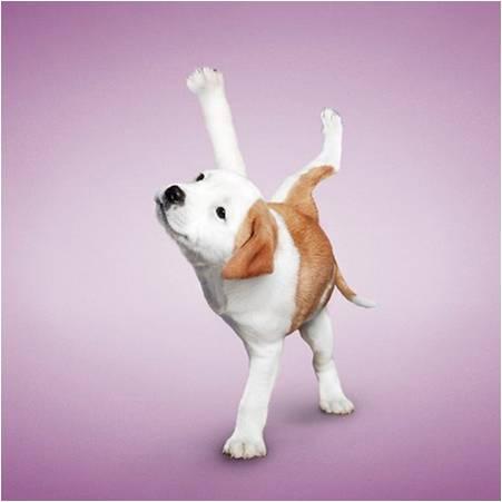 可爱猫狗瑜伽照片